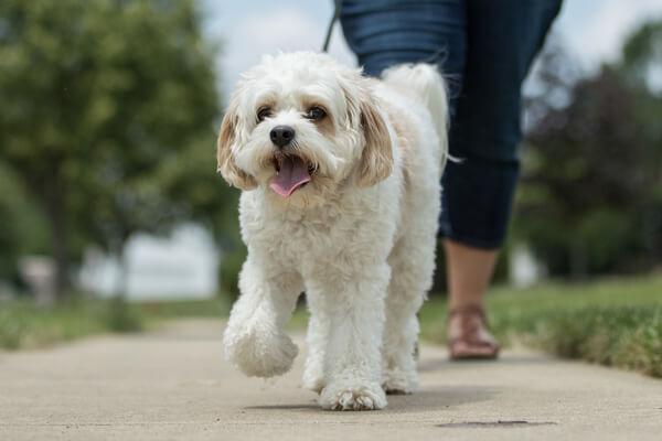 animal insurance policies