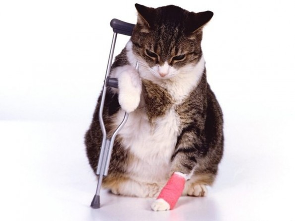 Illness insurance