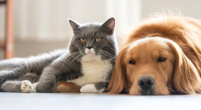 Treatment for Fleas and tick on Your Dog
