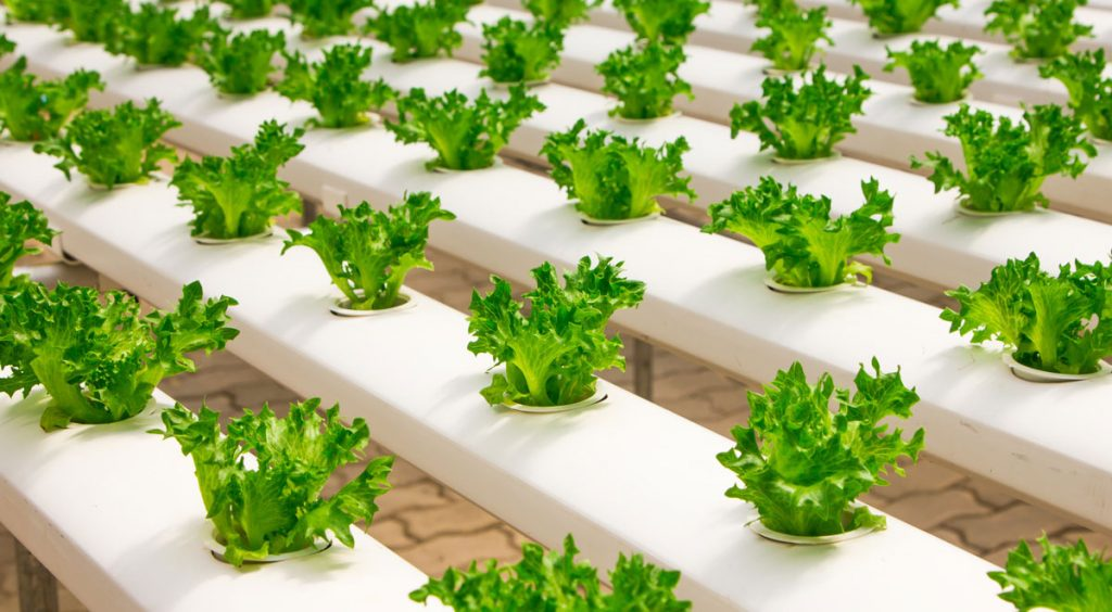 buy hydroponic products canada