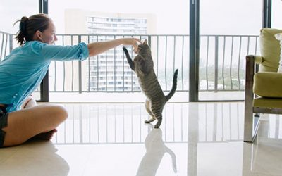 Good Insurance For Your Cat