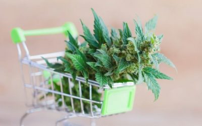 High-quality yet affordable weed products for sale
